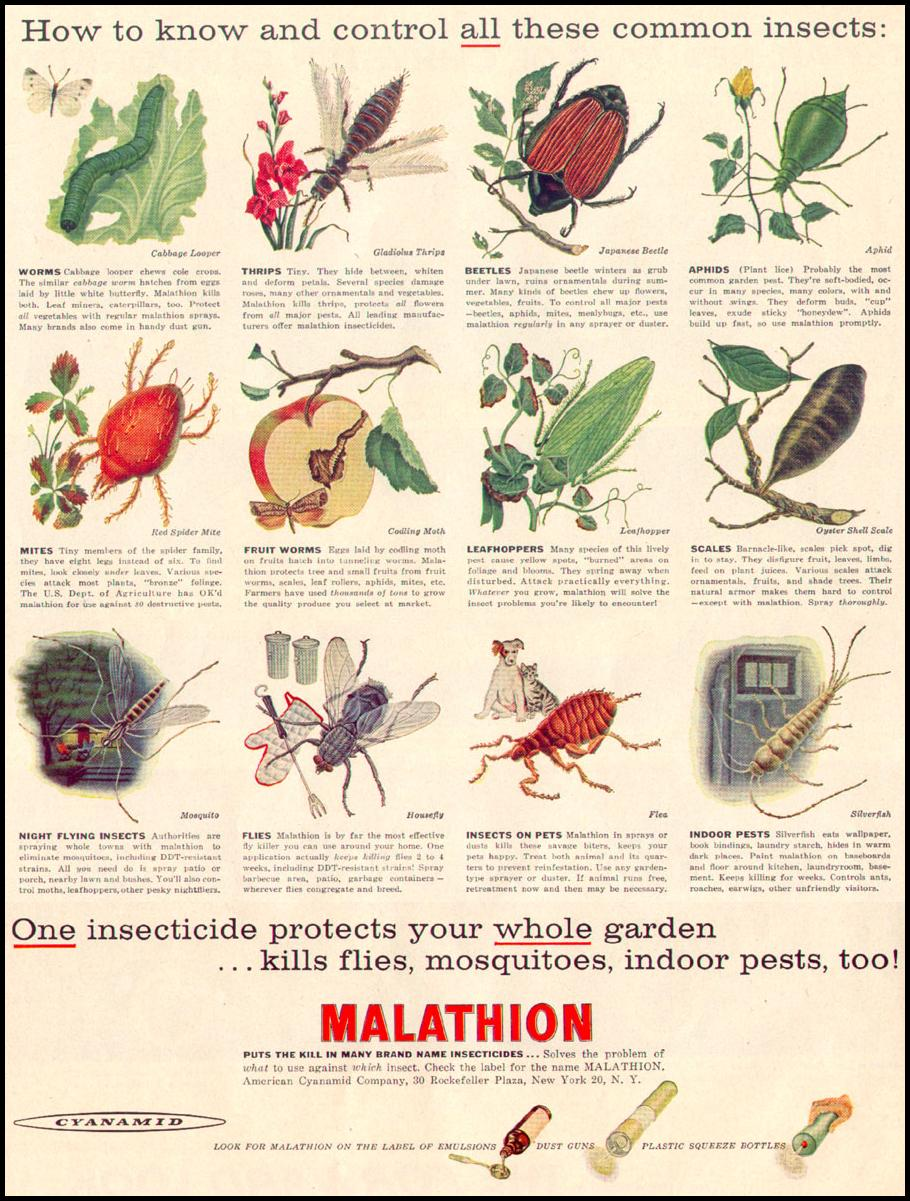 MALATHION INSECTICIDE LIFE 04/08/1957 p. 56