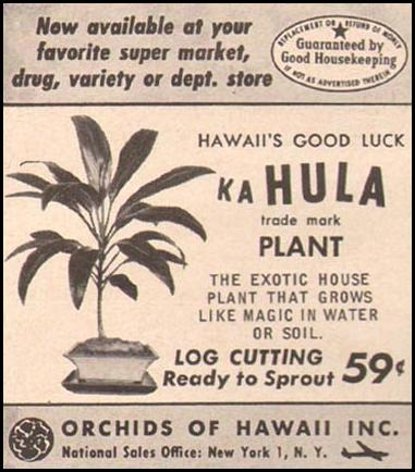 HAWAII'S GOOD LUCK KA HULA PLANT GOOD HOUSEKEEPING 05/01/1957 p. 272