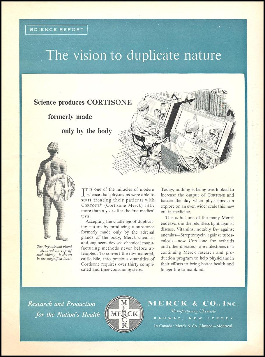 SYNTHETIC CORTISONE NEWSWEEK 06/11/1951 p. 7