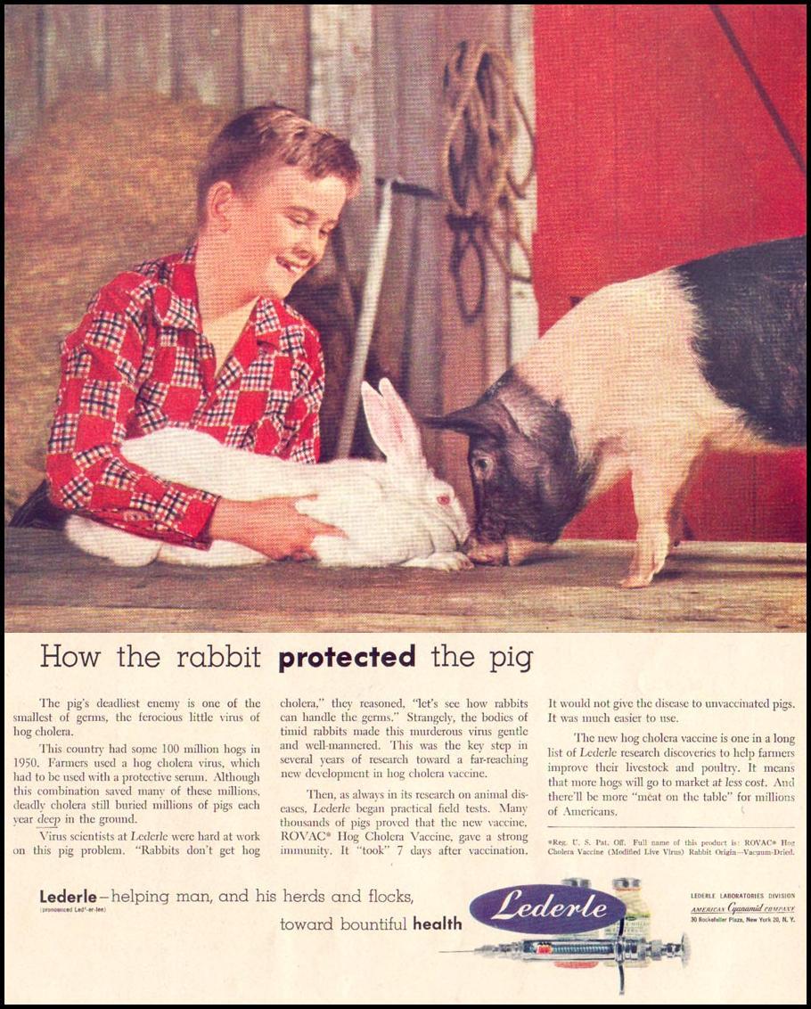 LIVESTOCK VACCINES LIFE 06/16/1952 p. 67