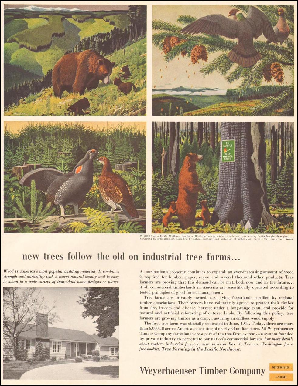 WEYERHAUSER TIMBER SATURDAY EVENING POST 03/26/1955